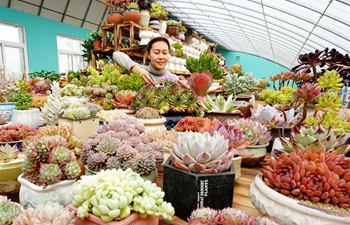 Succulent plants business helps boost income for locals in north China's Hebei