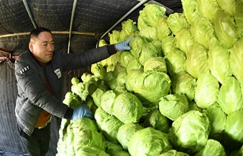 Laoting County in China's Hebei relies on vegetable growing to increase farmers' incomes