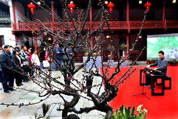 Potted plum exhibition kicks off in Shanghai