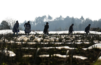 Farmers engage in farming in early spring across China