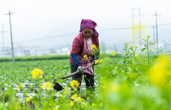 Guizhou gov't increases poverty alleviation efforts in rural areas