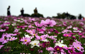 Gesang flowers enter blooming season in China's Guangxi