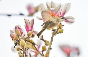 In pics: birds resting on flowering trees across China