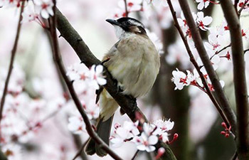 Birds, flowers seen in spring