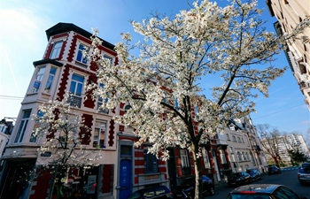 In pics: blooming flowers in Brussels