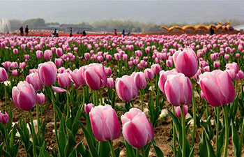 People visit tulip garden in central China's Henan