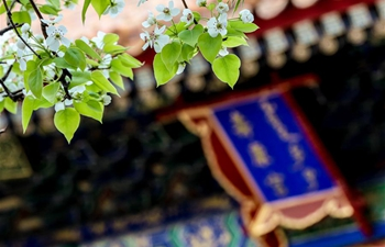 In pics: flowers in Forbidden City in Beijing