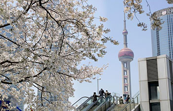 Cherry blossoms in Pudong New Area, China's Shanghai