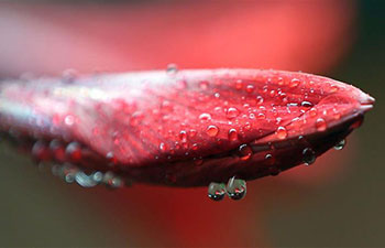 Marvelous scenes of water drops on flower buds after rain