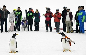 Visitors look at penguins at indoor ski arena in NE China's Harbin