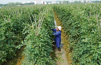 Farmers busy with farm work in China