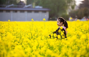 People enjoy cole flower scenery in China's Hebei