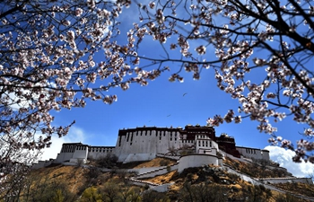 In pics: flowers near Potala Palace in Lhasa, SW China's Tibet