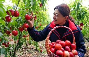 Over 7000 greenhouses set up in Caofeidian District of Tangshan