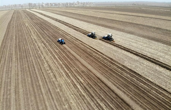 Farmers work in field in northeast China's Jilin
