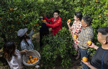 Pic story: music student turned fruit grower finds success in hometown Zigui, C China