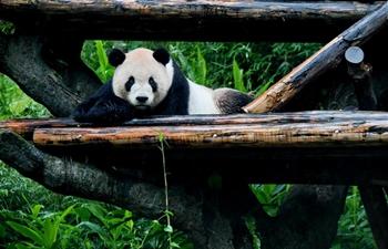 Two giant pandas at Taipei Zoo attract tourists