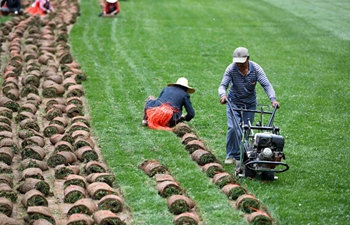 Need for turf in cities drives farmers into turf business in China's Anhui