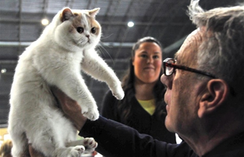 "International cat show ""Baltic Winner 2019"" held in Riga, Latvia"