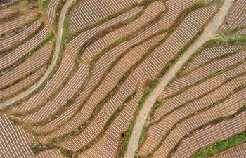 View of terraced field in C China's Hubei