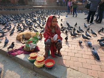 Nepalese girl sells grains for feeding pigeons in Kathmandu