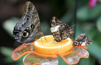 Zoo Budapest opens Butterfly Garden