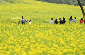 Tourists have fun at cole flower fields in China's Shanxi