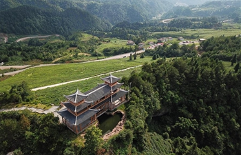 Scenery of tea garden in Dushan County, China's Guizhou