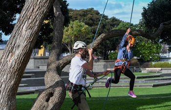 Tree climbing competition held in downtown Wellington, New Zealand