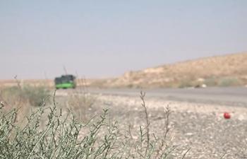 Life returns to Palmyra city with return of civilians