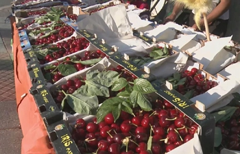 The 99th edition of the cherry festival in Morocco's Sefrou