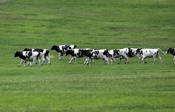 Scenery of Sanhuan pastureland in Dalian, NE China's Liaoning
