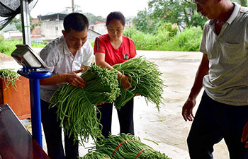 Long bean industry helps lift people out of poverty in China's Guangxi