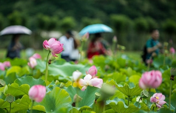 Visitors view lotus flowers at Puzhehei national wetland park in Yunnan