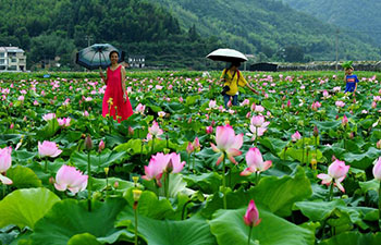 Tourists view lotus flowers in Wufu Town, Fujian