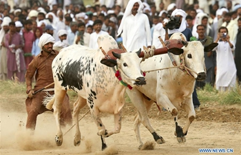 Traditional bull race held in Hasar, Pakistan