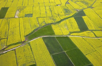 Aerial view of cole flowers in northwest China's Gansu
