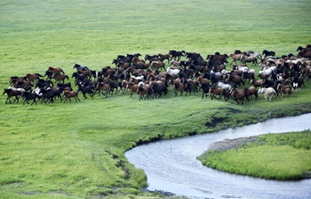 In pics: equine culture event in Inner Mongolia