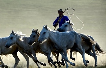 In pics: horse lassoing in north China's Inner Mongolia