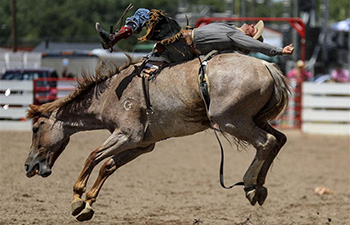 Bull riding event held during Cheyenne Frontier Days, U.S.