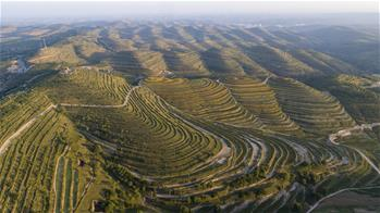 Scenery of terraced field in Pengyang County, China's Ningxia