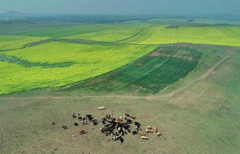 Scenery of farm fields in Saibei, China's Hebei