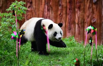 Birthday party held for giant panda in Changchun, China's Jilin