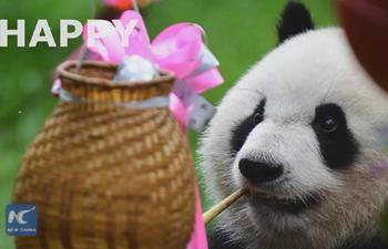 Happy birthday! Giant panda turns 3