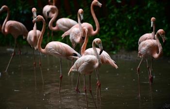 Animals enjoy coolness in rain
