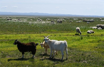Scenery on grassland in Xilingol League, N China's Inner Mongolia