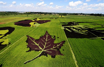 Patterns in rice fields in NW China's Xinjiang