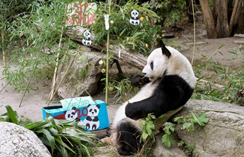 Vienna's giant panda Yuan Yuan to celebrate 20th birthday