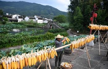 Farmers air corns in Huangshan, east China's Anhui