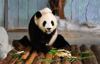 Mooncakes made for giant pandas in Hainan